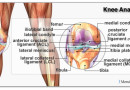How to Prevent Knee Injuries?